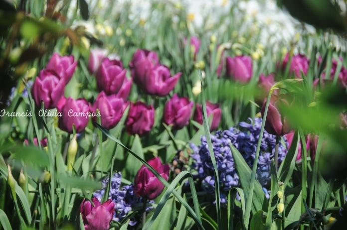 Hááá! Primavera em Paris <3